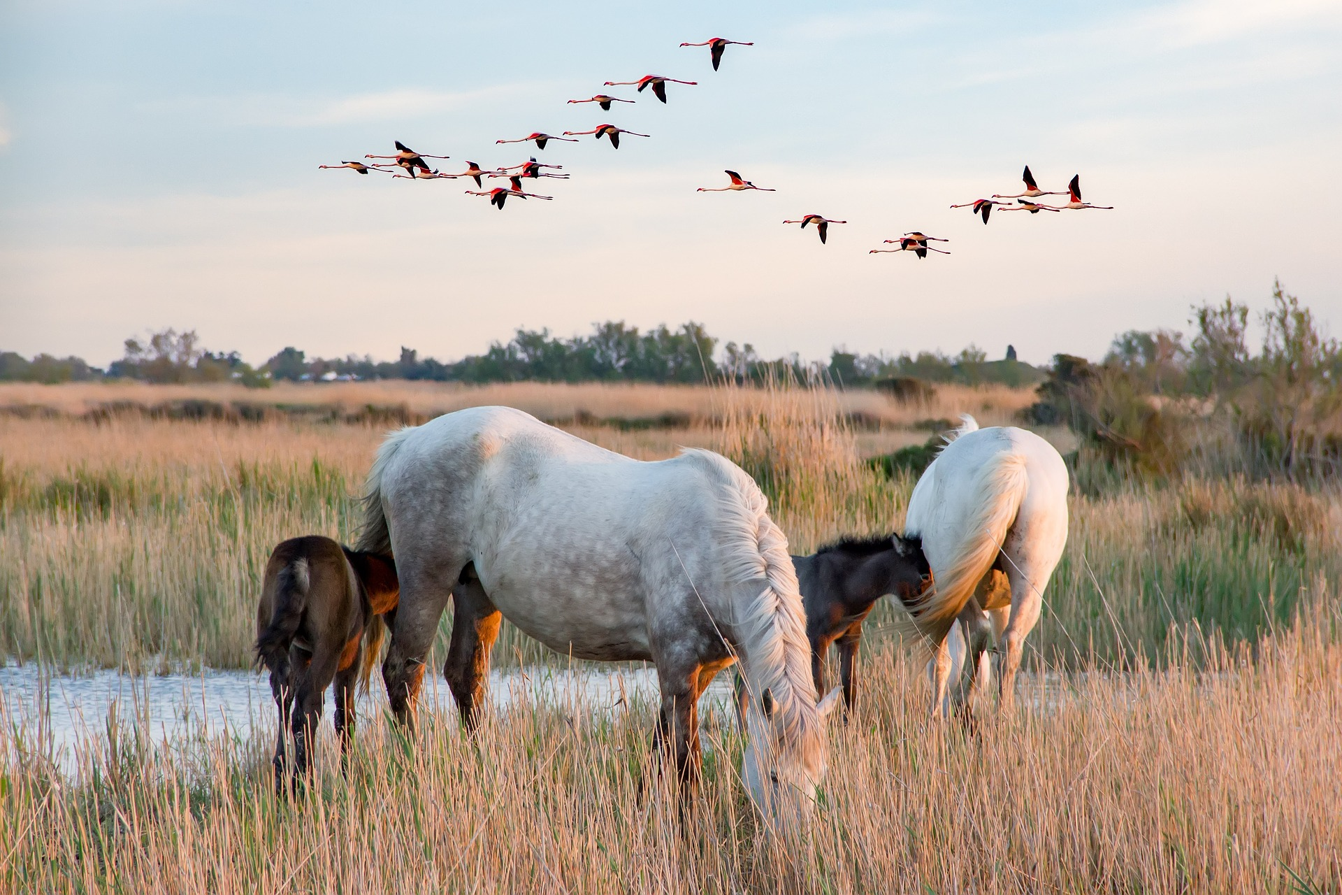 scene-of-the-camargue-6-2493873_1920
